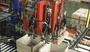 huevos 0 300x174 - Diseño y automatización industrial para una planta de encajado de huevos